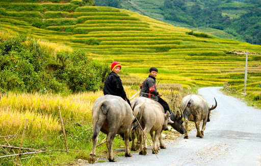 Vietnam biking tours